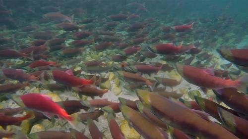 Democrats call EPA's Bristol Bay move 'inconsistent with basic logic'