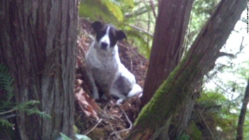 A hiker did not survive his last climb. His loyal dog barked by his side until rescuers found him