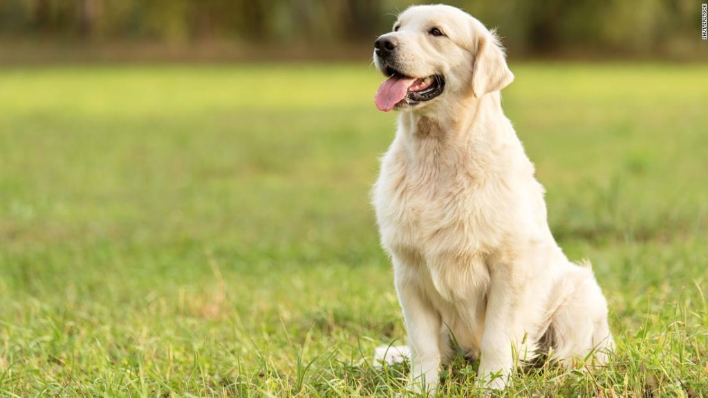 Nope, every dog year isn't equal to 7 human years, researchers now say