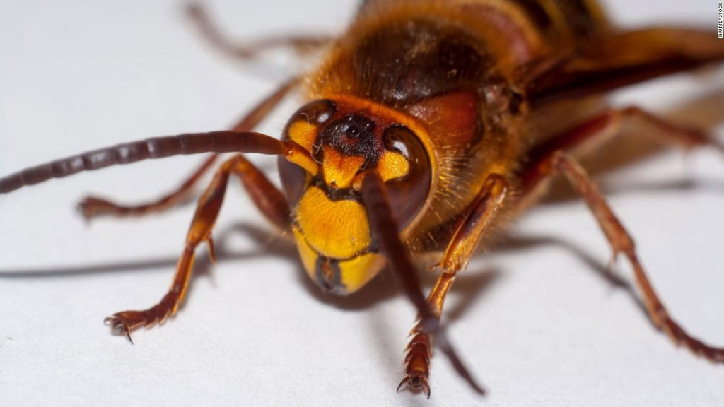 'Murder hornets' aren't the bugs you should worry about. These bloodsuckers are