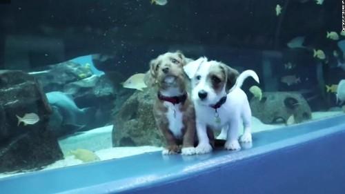 See adorable puppies run around the Georgia Aquarium