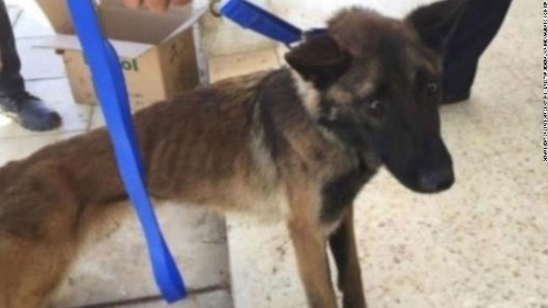 The US sent bomb-sniffing dogs to Jordan. Now they're dying from poor treatment