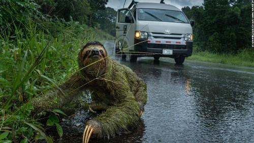 Mesmerizing wildlife photos capture nature's wonders