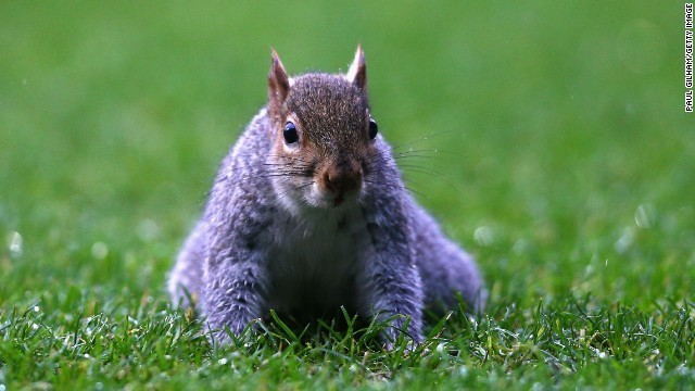 Squirrels listen in on bird chatter to decide if they're safe, and that's scientifically significant