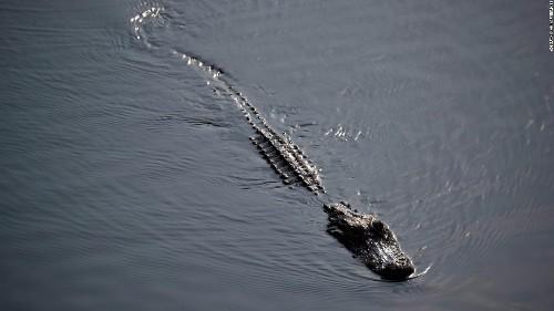 Alligator did not kill South Carolina man