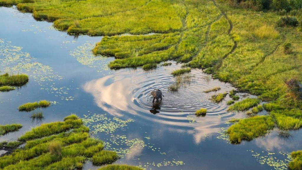 How to Plan Your First Safari in Botswana