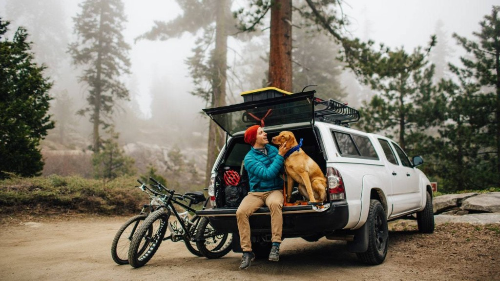 Road Trips with Dogs and Cats: 10 Supplies You Need to Pack