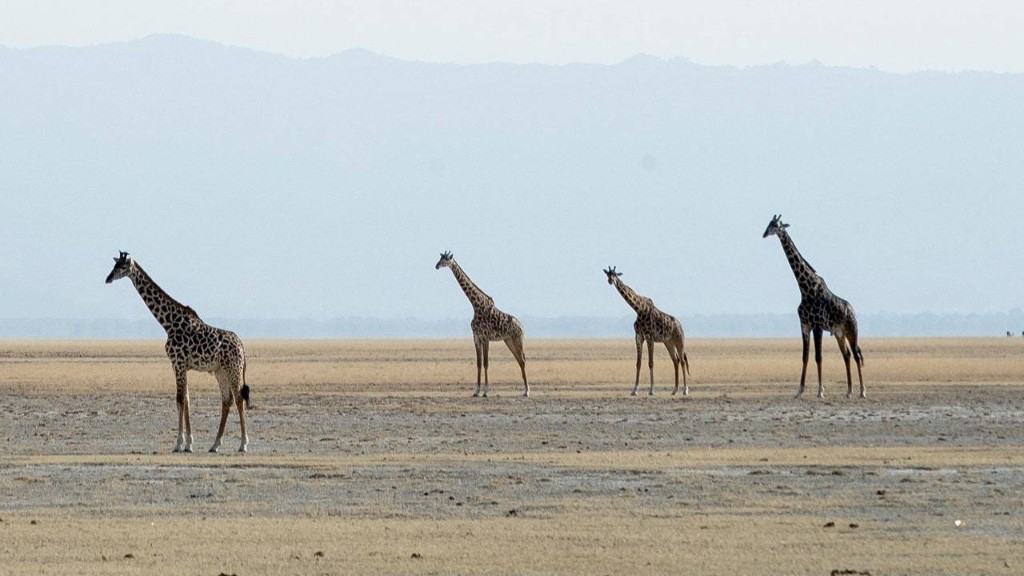 You Can Still Book a Last-Minute Safari for This Year
