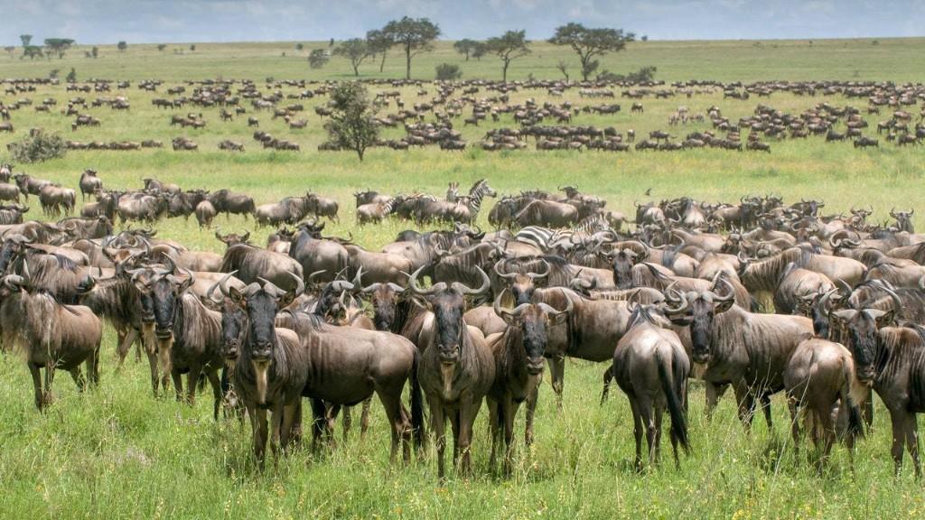 The Complete Guide to Safari cover image