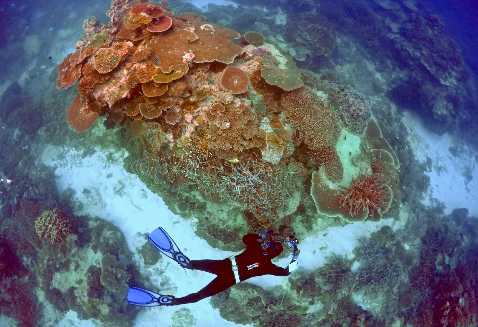 A Tribute to the Late, Great Barrier Reef in Pictures