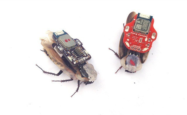 Remote Control Cockroaches With Your iPhone, Only Minimal Surgery Required