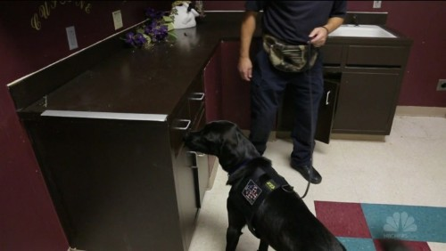 Electronics-sniffing dogs can root out USB drives