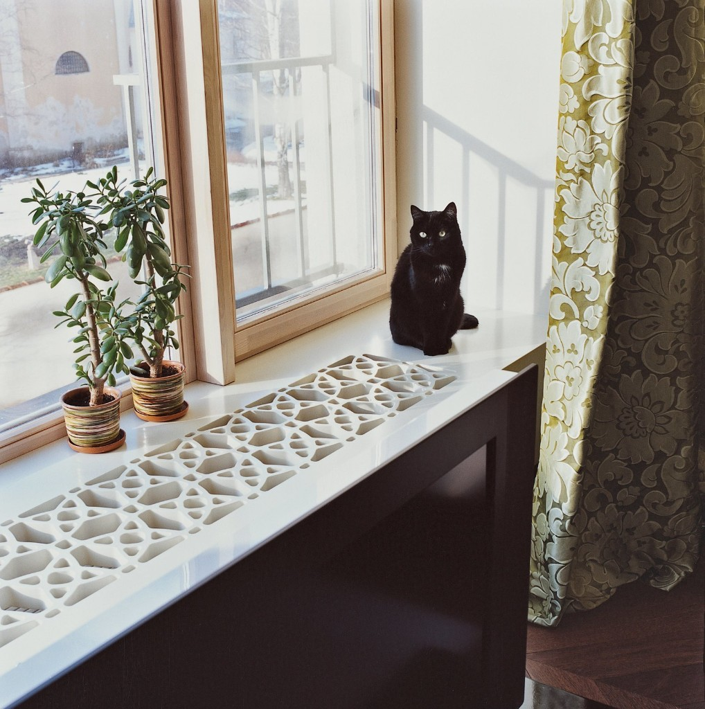 13 Houseplants That Are Safe for Cats and Dogs - Dwell