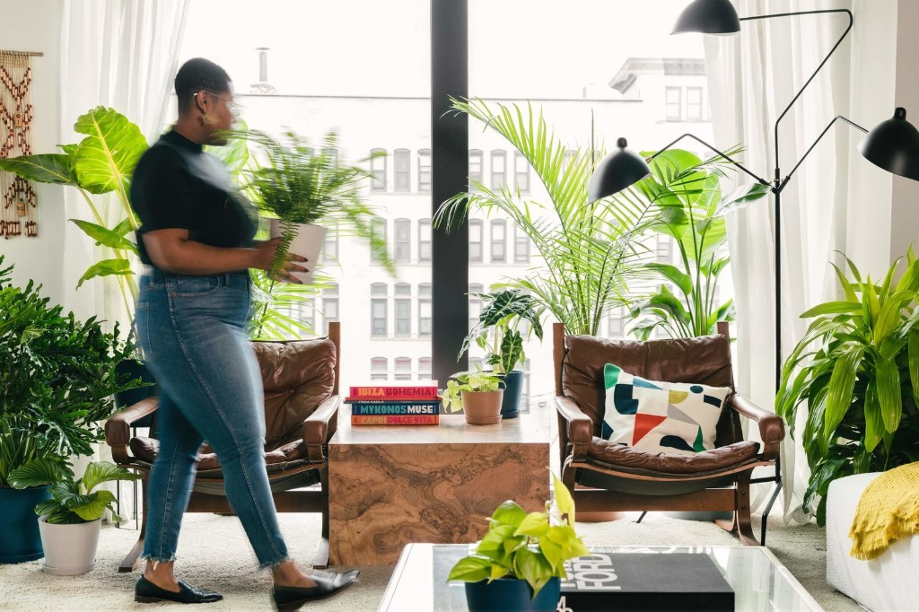 It's Time to Prune Your Houseplants: Here's How the Experts Do It