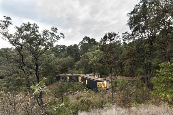 Upcycled Trees Cloak This Modern Mexican Home