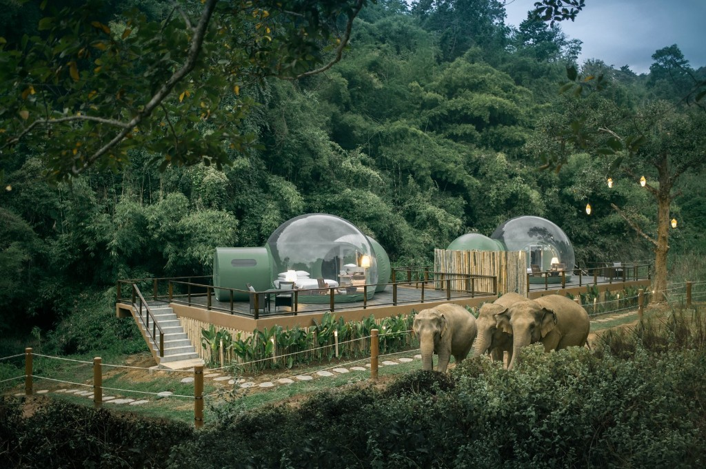 Thailand's Jungle Bubbles Let You Sleep in an Elephant Habitat