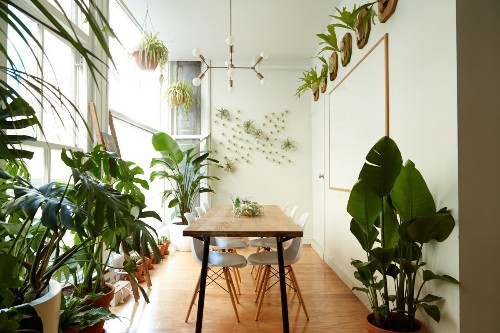 Houseplants You Can't Kill