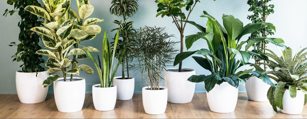 Why Plants Improve Mornings
