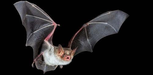 Tesla has to move endangered bats to build Gigafactory 4, could delay and faces opposition