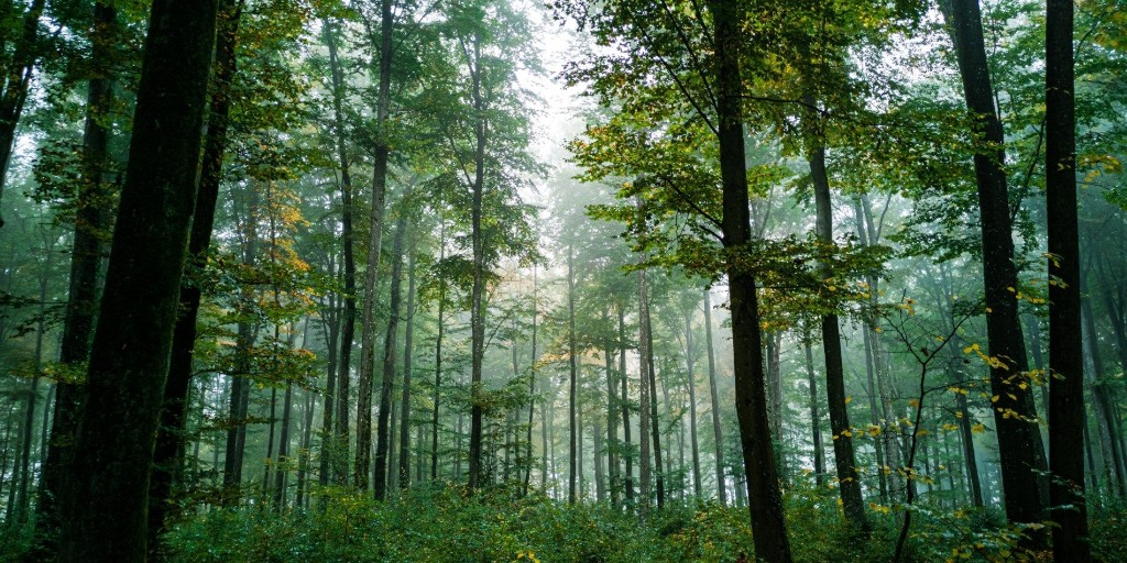 Climate Crisis Weekly: Planting trees is great, but it's not enough - Electrek