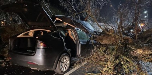 Tesla Autopilot saved two families, say owners in freak accident where giant tree fell on two Model X SUVs - Electrek
