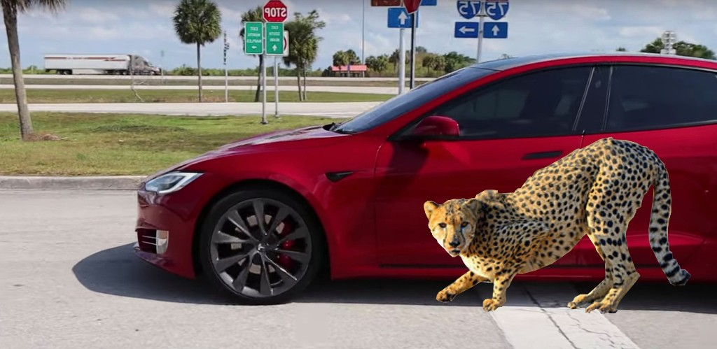 First look at Tesla's launch mode with 'Cheetah stance': proves to be slightly quicker - Electrek
