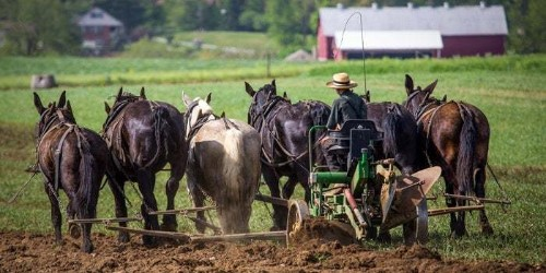 Are Entrepreneurs ignoring The Agricultural Sector?