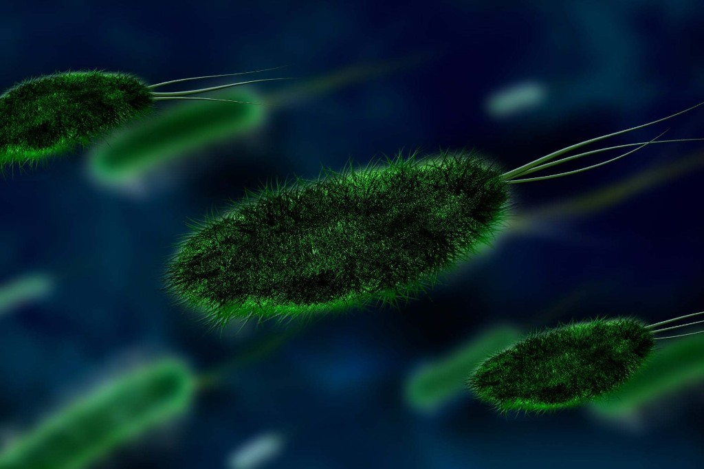 The Most Common Ways Pathogens Invade the Body