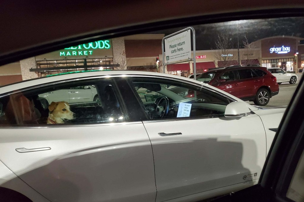 """Tesla vehicles have a """"Dog Mode"""" function and this is the photo that left users shocked"""