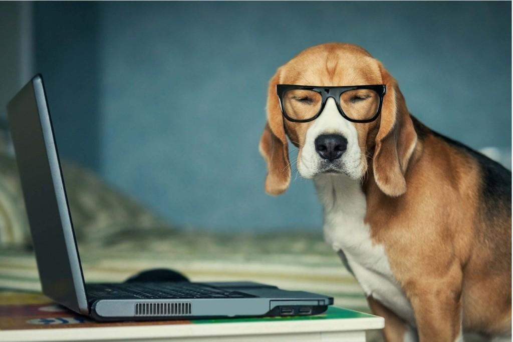 Coronavirus: Your Pet Is Your Saviour During Quarantine