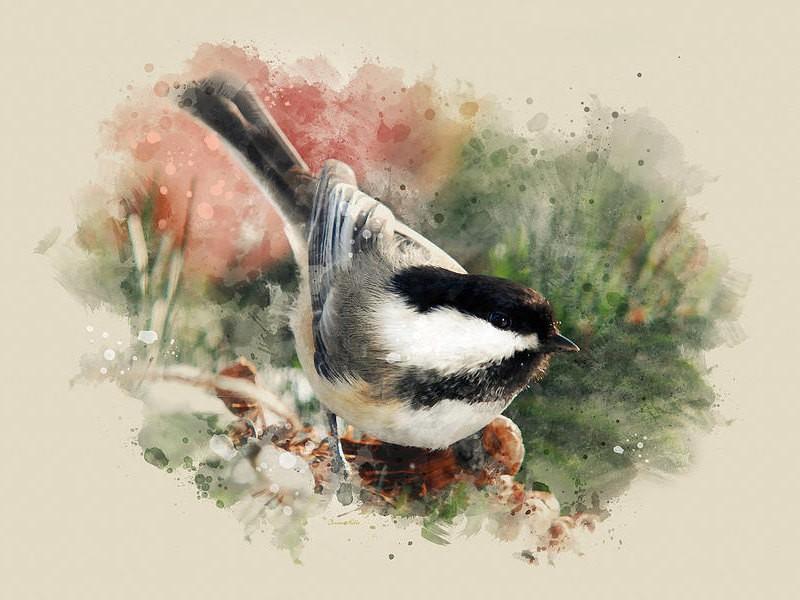 Chickadee Bird Art, Bird Prints, Nature Wall Art, Wildlife Prints, Primitive Country Decor, Watercolor Bird Art, Fine Art Print, Wall Art