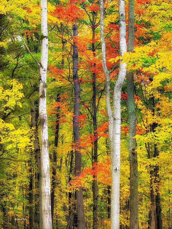 Forest Landscape Print, Autumn Decor, Fall Photography, Fine Art Nature Photography, Wall Art Trees, Colorful Autumn Trees, Photo Prints