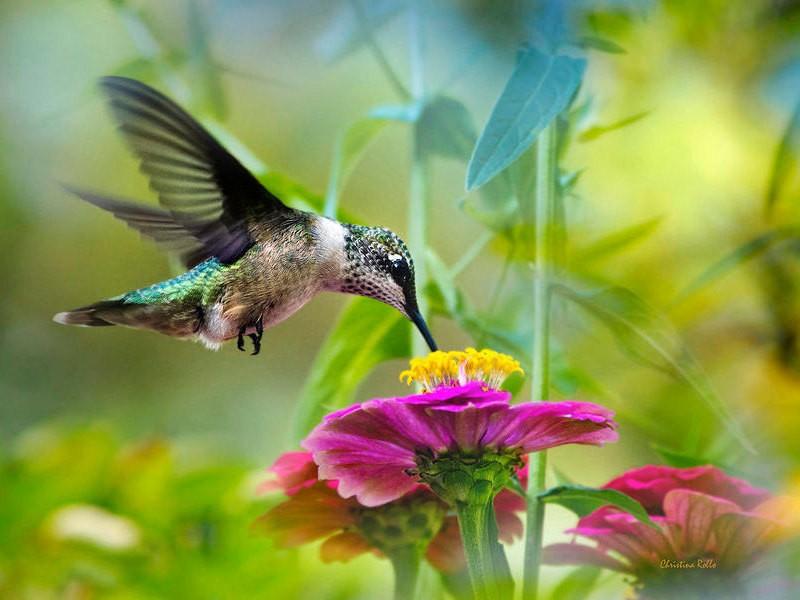 Womens Gift, Hummingbird Art, Fine Art Photography, Photo Print, Bird Photography, Colorful Bird, Photography Print, Best Seller