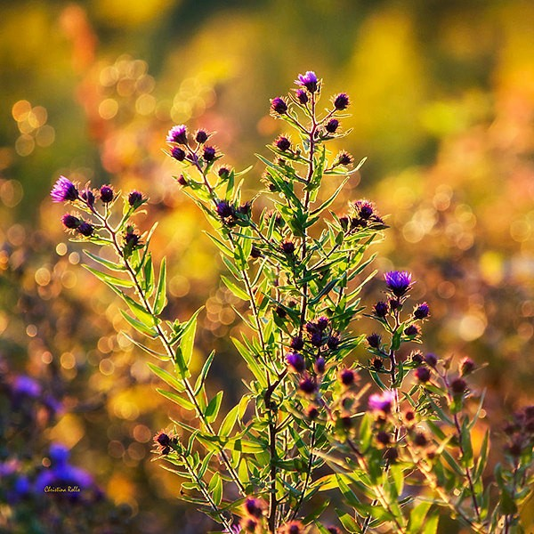 Nature Photography, Flower Photo, Floral Print, Flower Photography, Flower Print, Fine Art Photography, Wall Art, Fall Decor, Autumn Flowers