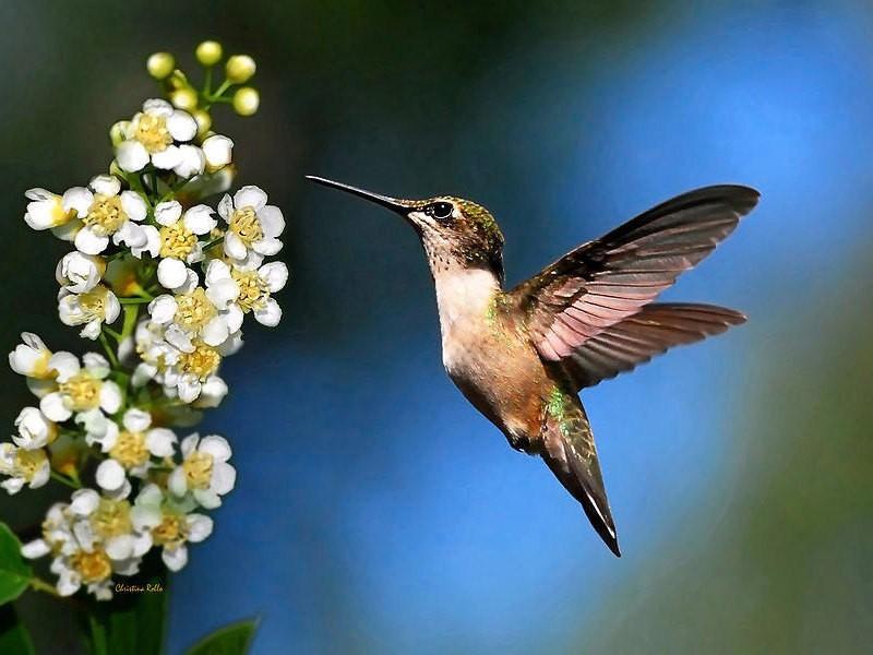Hummingbird Decor, Bird Photography, Hummingbird Photo, Fine Art Photography, Nature Print, Wall Art, Hummingbird Print, Wildlife Prints