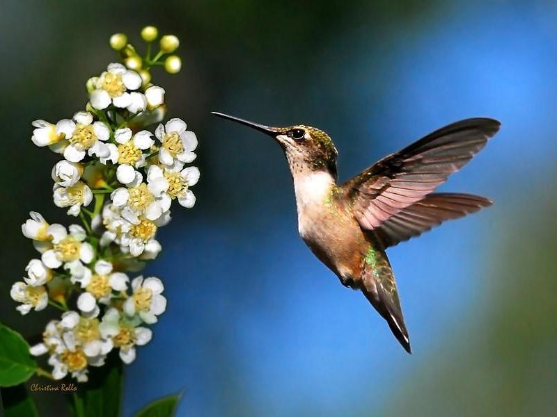 Hummingbird Photography - Magazine cover