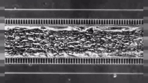 'Heart-on-a-chip' could replace animals in drug development