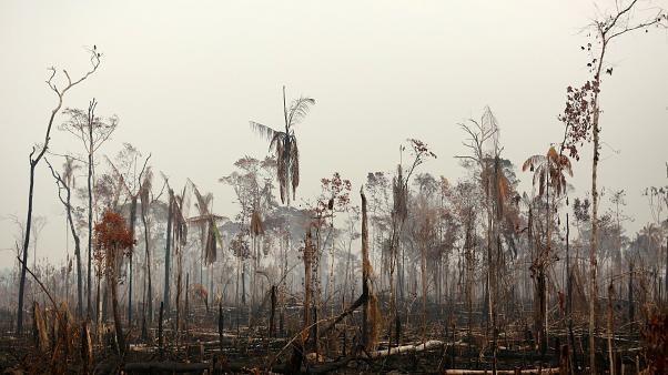 Kırmızı et tüketimini azaltarak Amazonların kurtarılmasına yardımcı olabilirsiniz