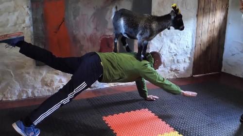 Pilates mit Zwergziege Mabel