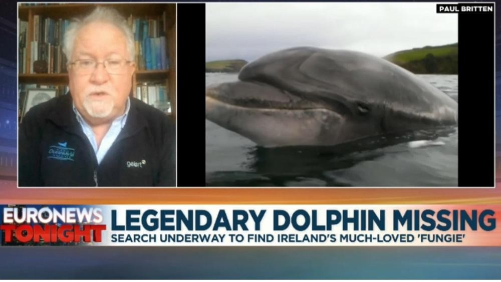 Massive search underway in Ireland for dolphin superstar Fungie after disappearence from Dingle Bay