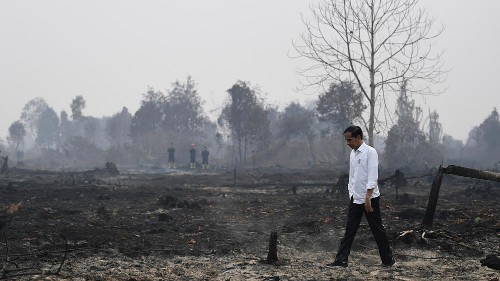 Burnt forests and consequences of the smoke