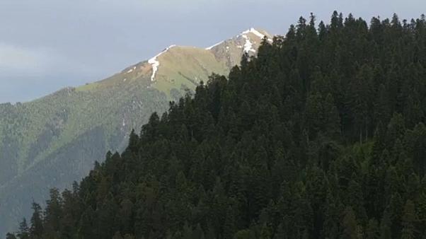 Les forêts caucasiennes menacées par les activités humaines