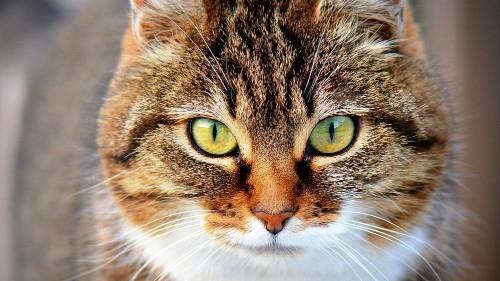 1. Fall: Katze mit Coronavirus infiziert