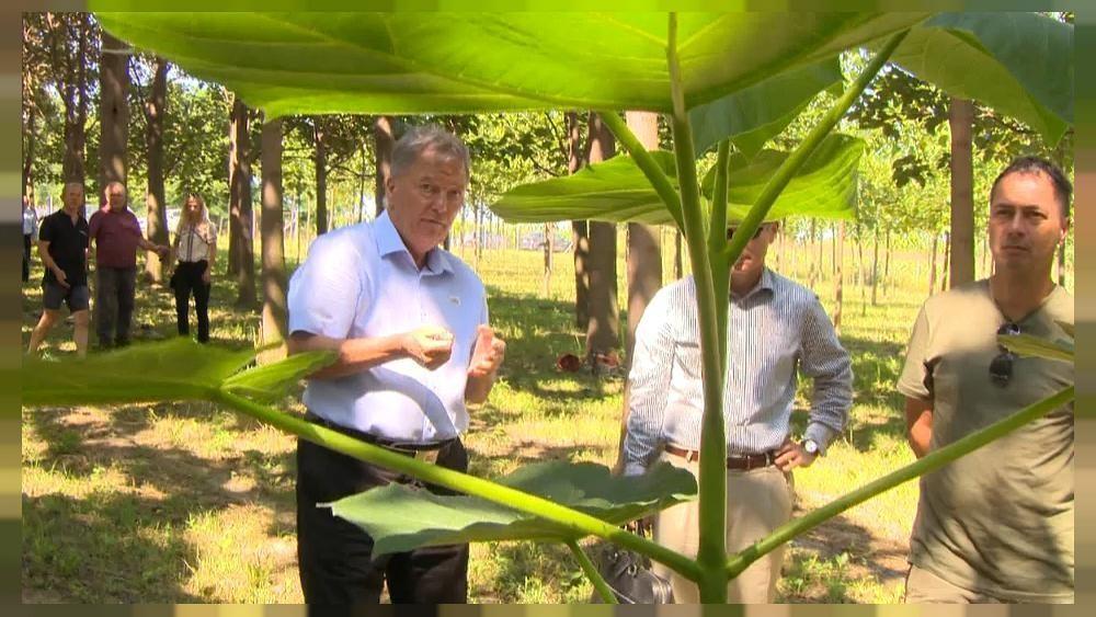 Erste Kohlenstoff-Farm: Kann der Smaragdbaum das Klima retten?
