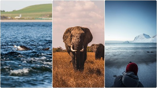 20 climate, nature and environment documentaries you must see in 2020