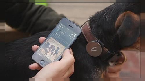Whistle, para estar informado de la actividad de tu perro