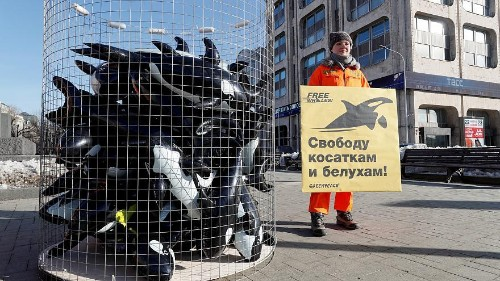 Russia set to free 100 captive whales from 'prison'