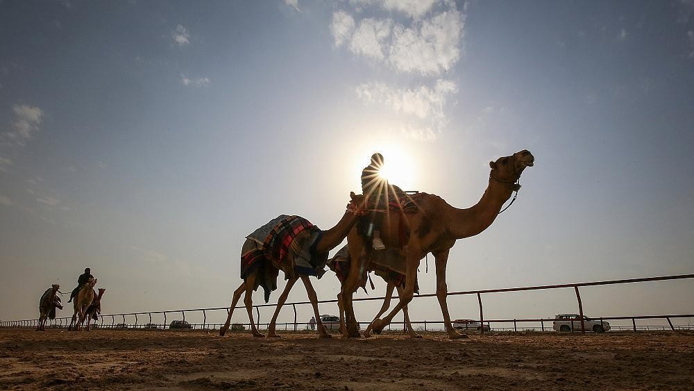 Crazy camel racing in Egypt's Sinai desert keeps Bedouin traditions alive