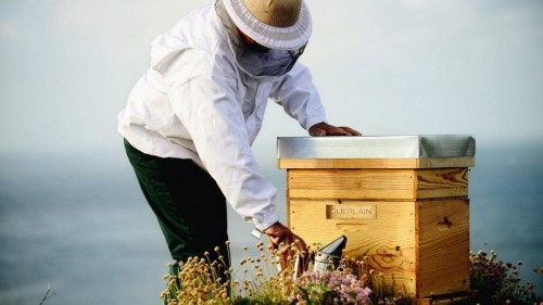 Guerlain's Bee Respect platform: a commitment to transparency and traceability