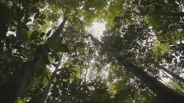 Amazónia: Europa pressiona Brasil